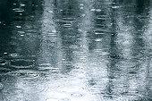 反射の木々、水たまり