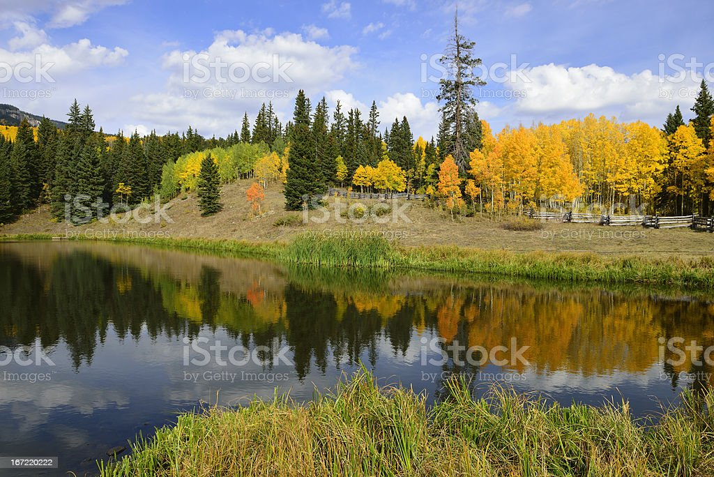 reflection of trees in the lake royalty-free stock photo