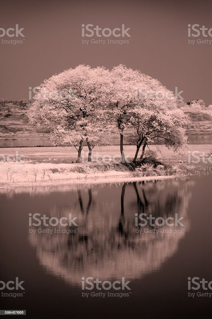 Reflection of trees in the river stock photo