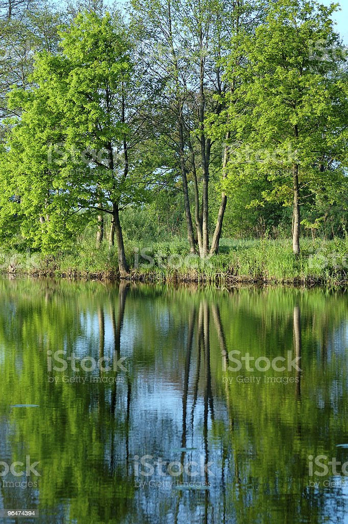 Reflection of trees in the water royalty-free stock photo