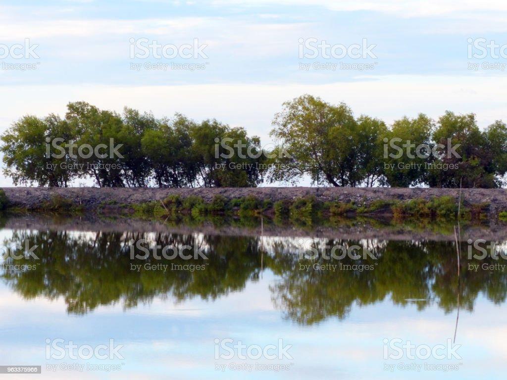 reflektion av träd på sjön - Royaltyfri Blå Bildbanksbilder