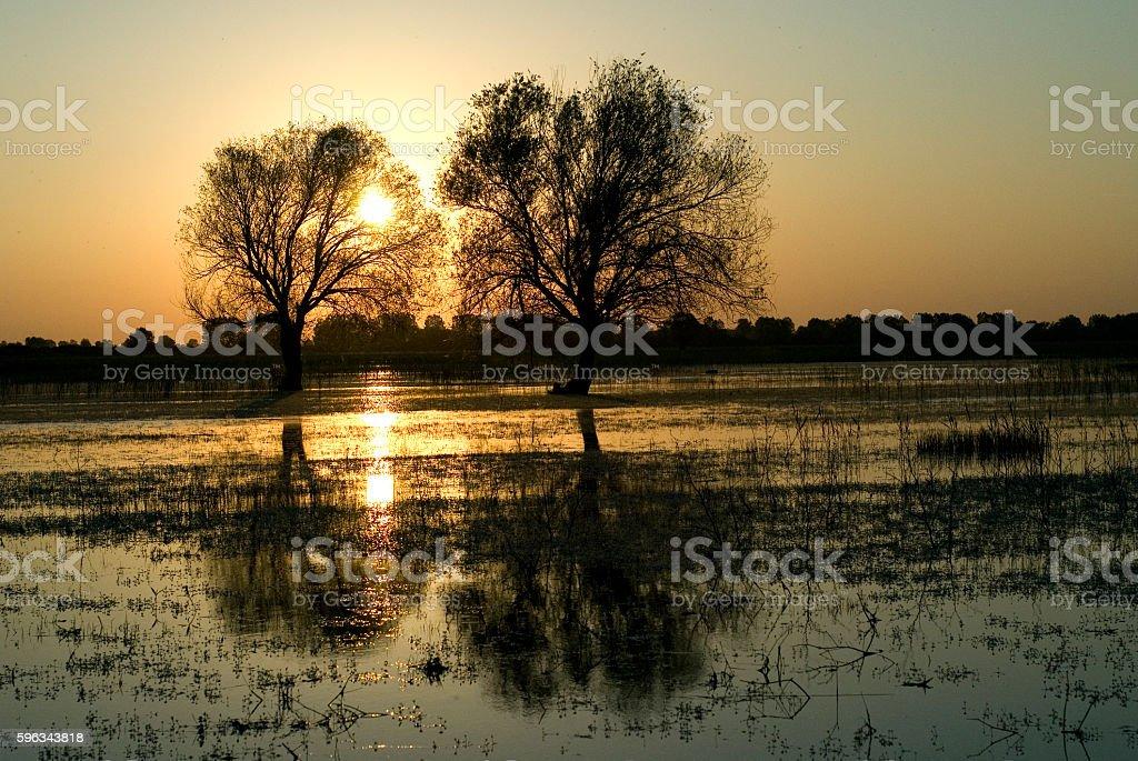 Reflection of trees on the Ulubat Lake. royalty-free stock photo
