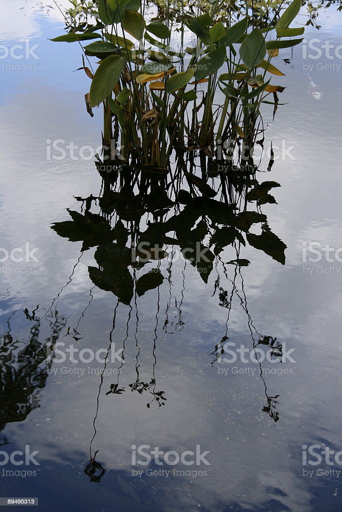 Reflection on a Pond royalty free stockfoto