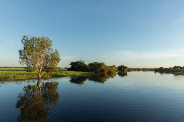 Reflection on Yellow Water Billabong stock photo