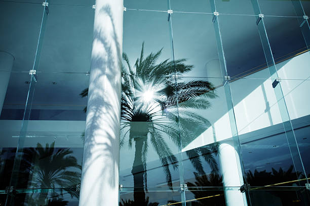reflection palm stock photo