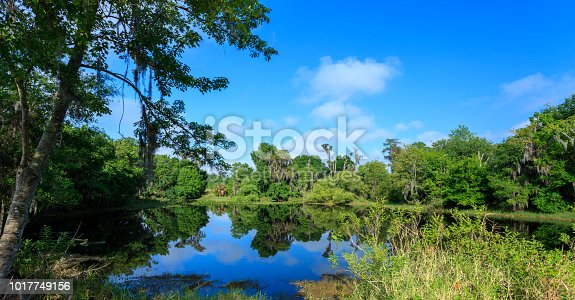 This View of the Lake and the Woods is located in the Shingle Creek Preserve in Kissimmee Florida. Shingle Creek is recognized as the Headwaters of the Everglades in Florida. This is Shingle Creek Preserve just over two miles north from where it feeds into Lake Tohopekaliga in Kissimmee, Florida where Birders, Bass Fishermen, Kayakers, and Tourists enjoy the ecotourism opportunities that can be found these on a year-round basis.