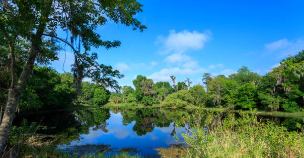 reflection  view of the lake and the woods - kissimmee stock photos and pictures