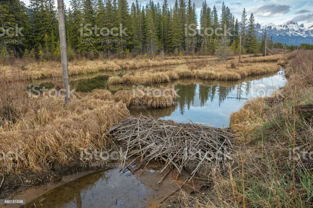 Reflections in a Beaver Dam stock photo
