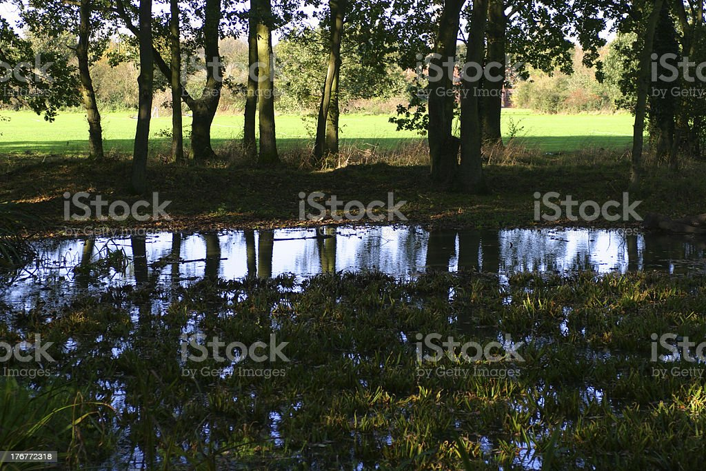 Reflections in a copse royalty-free stock photo