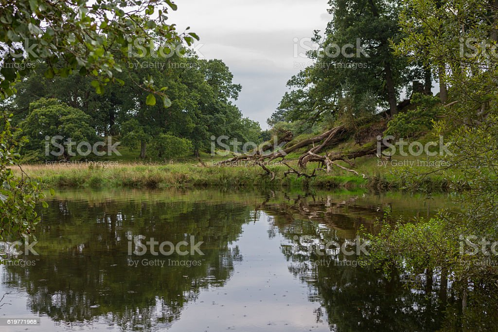 Reflections in a pond in Ambleside countryside, Cumbria, UK stock photo