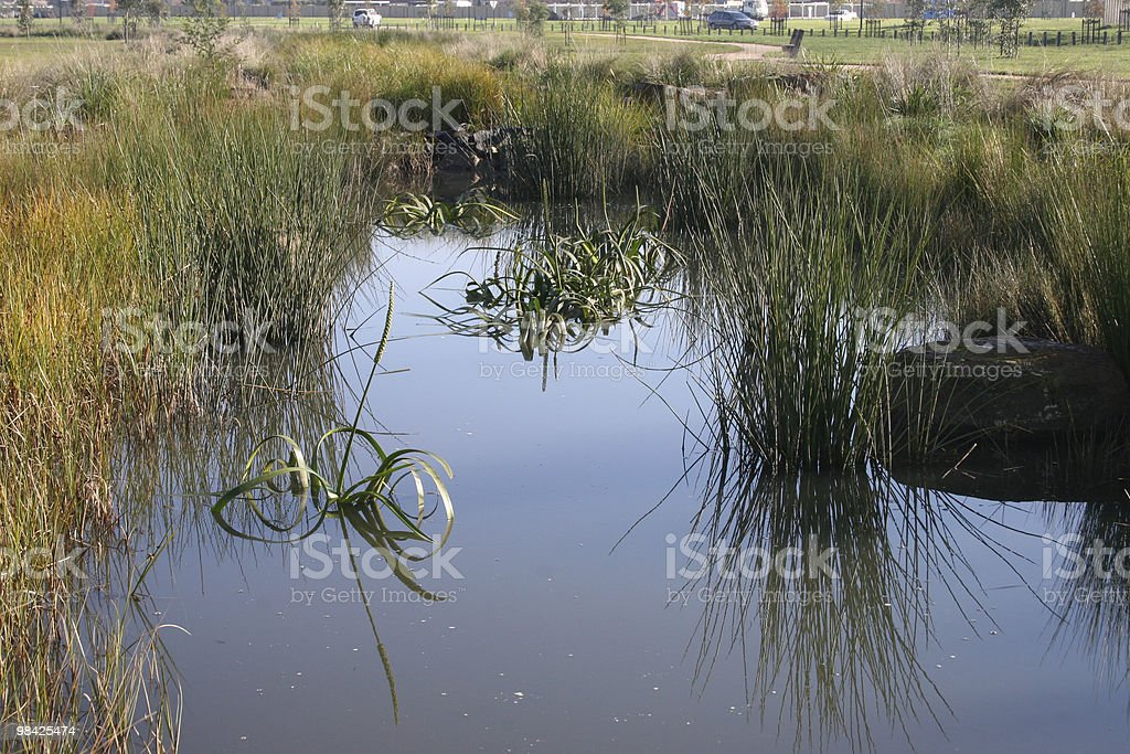 Reflections in a pond royalty-free stock photo