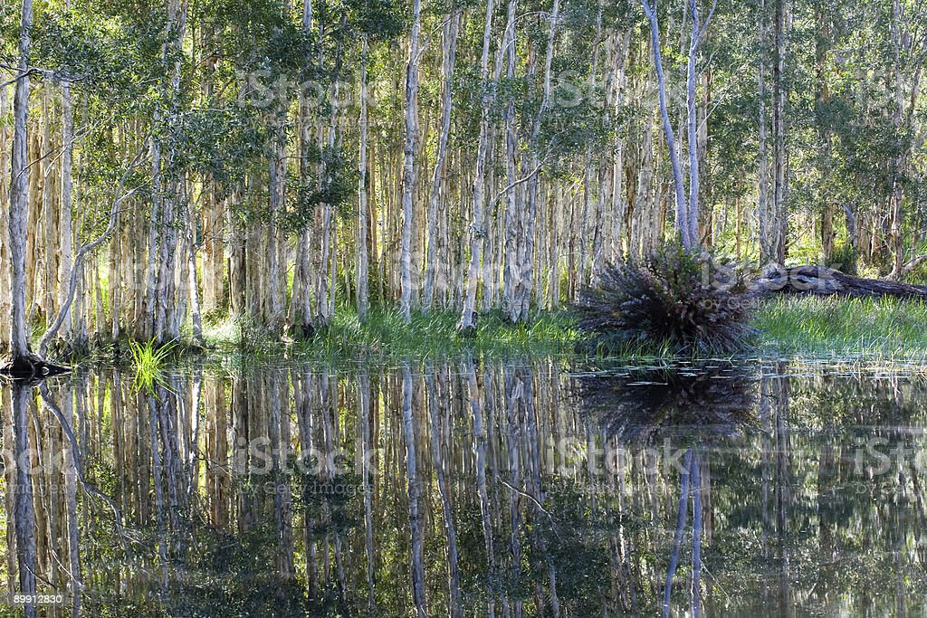 Reflections in a Swamp royalty-free stock photo