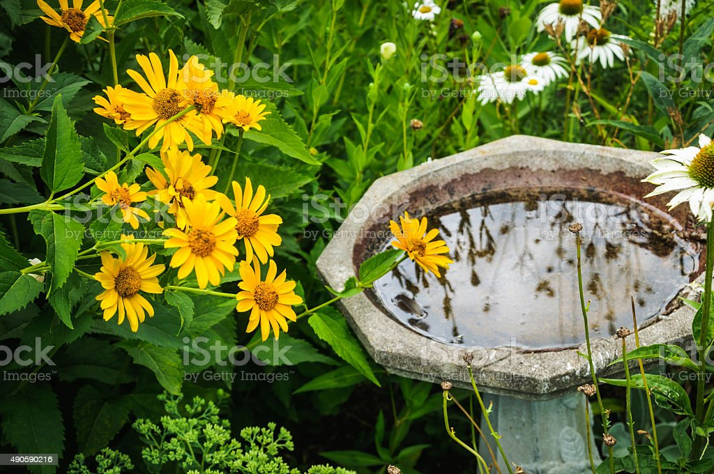 Reflections in the Birdbath stock photo