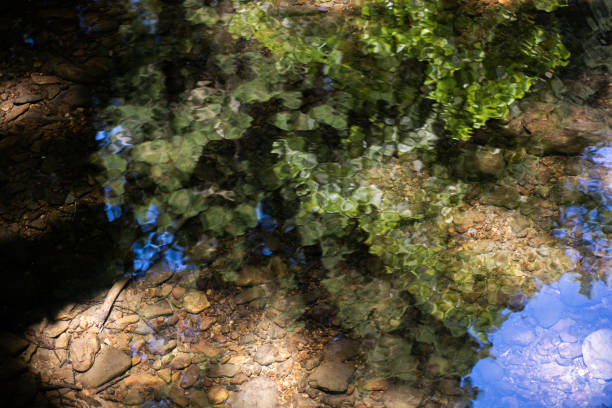 Reflections in the water at Meir Woods stock photo