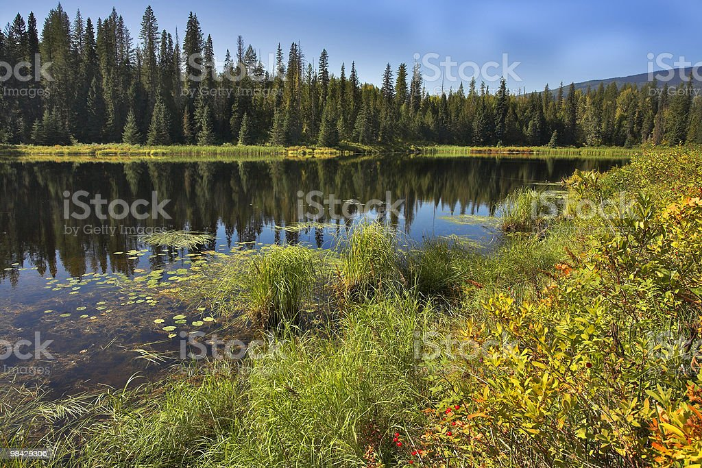 Reflections in water. royalty-free stock photo