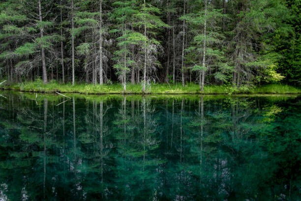 Reflections Of A Lush Pine And Cedar Forest Into Clear Waters Of A Natural Spring At Palms Book State Park In Michigan stock photo