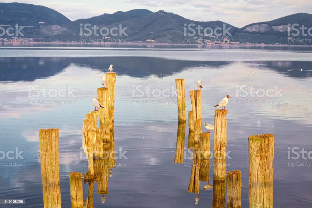 Reflections of birds balanced on the lake, Tuscany stock photo