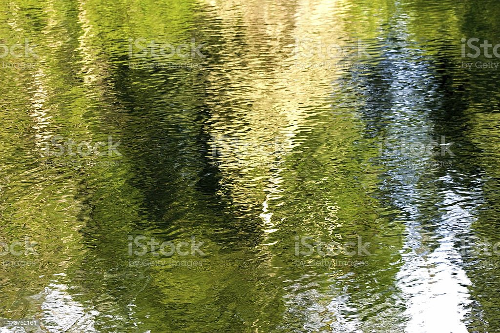 Reflections of Forest royalty-free stock photo