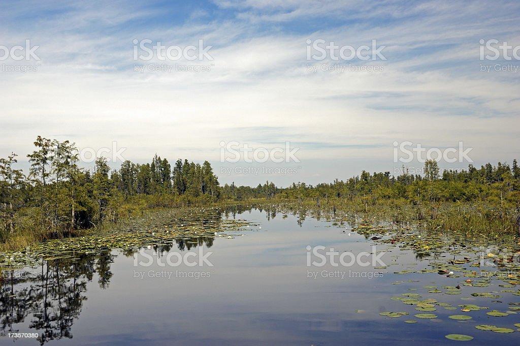Reflections of Okefenokee Swamp Wildlife Reserve stock photo