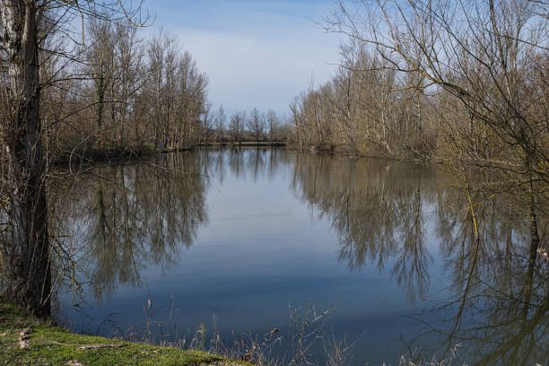 Reflections of trees in a lake stock photo