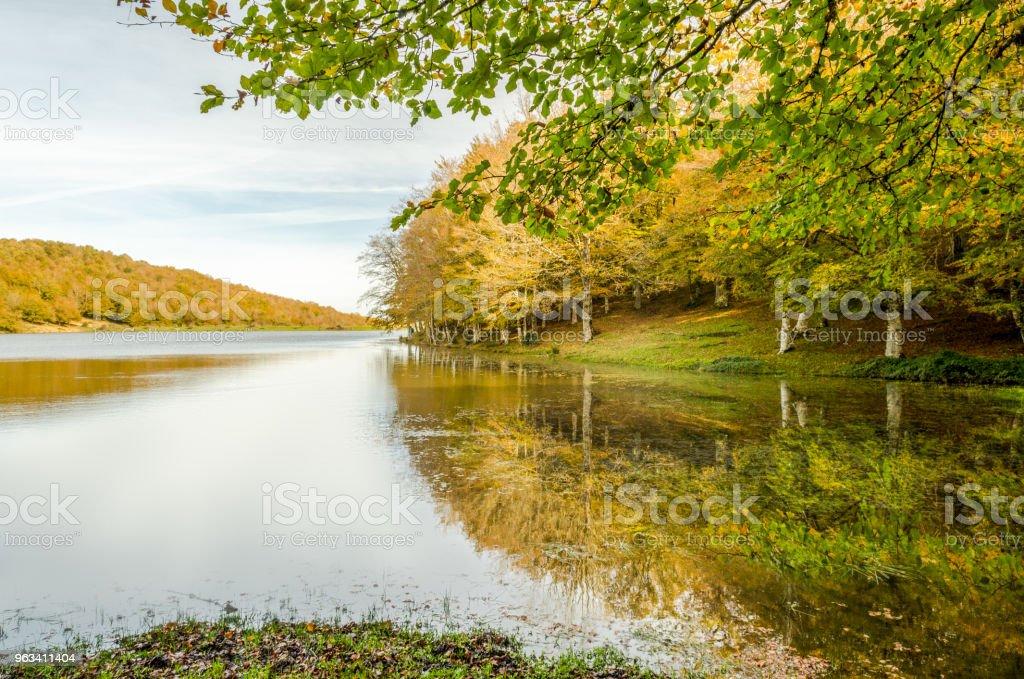Reflets sur le lac - Photo de Arbre libre de droits