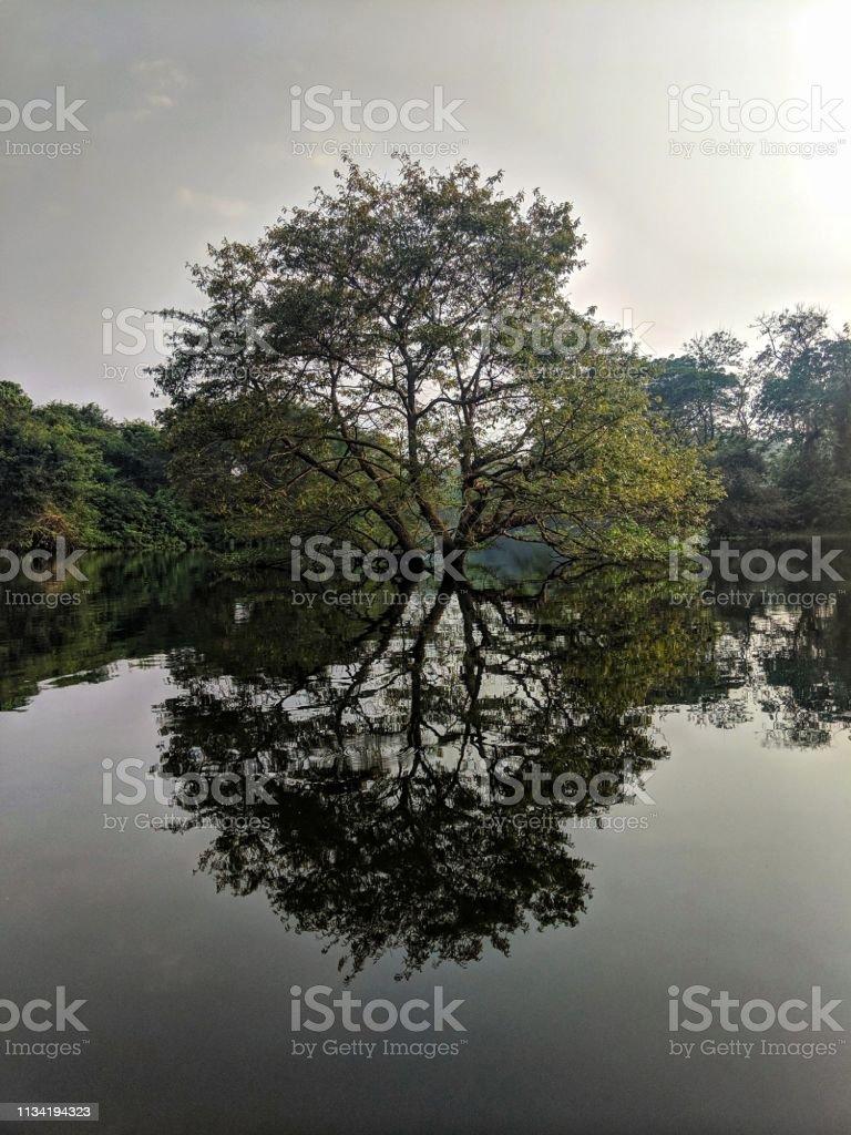 Reflections stock photo