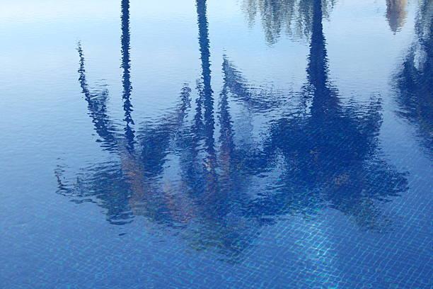 Das reflet des palmiers dans la piscine – Foto
