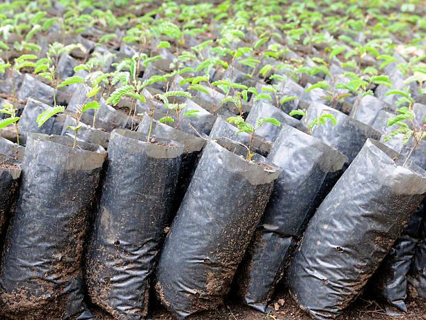 reforestation seedlings - herbebossing stockfoto's en -beelden