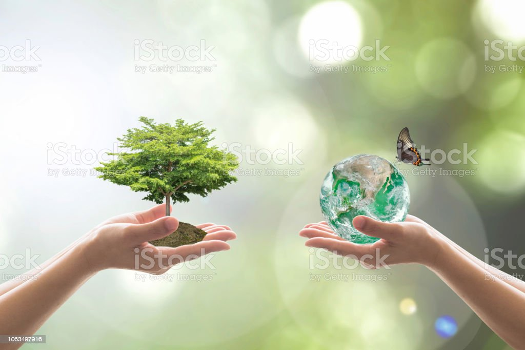 Reforestación, bosque de mundo sustentable y árbol cuidado día concepto: elementos de la imagen proporcionada por la NASA - foto de stock