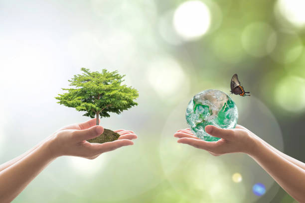 återbeskogning, hållbar värld skog och träd vård dag koncept: element av denna bild från nasa - biologisk mångfald bildbanksfoton och bilder