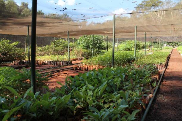 Reforestation tree nursery