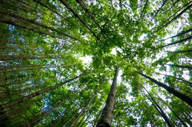 Aufforstung Bäume – Foto