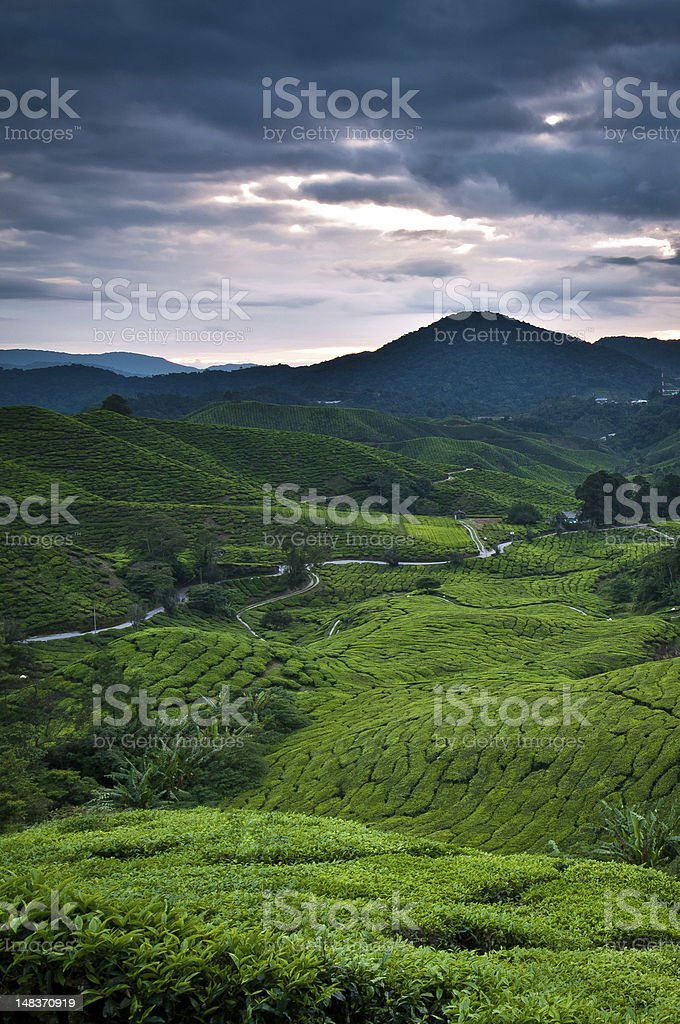 Refreshing morning in Cameron Highlands stock photo