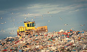 Refuse compactor working at garbage dump and flock of birds