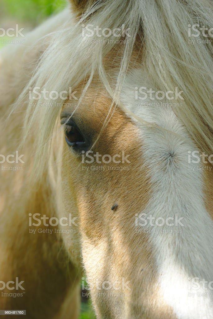 regard de cheval stock photo