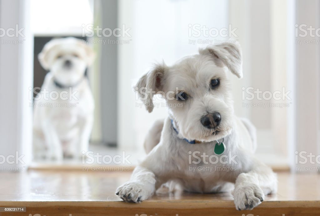Regard de chien stock photo