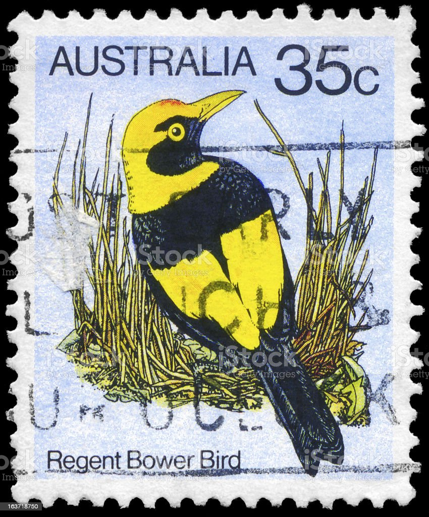 Regent Bowerbird royalty-free stock photo