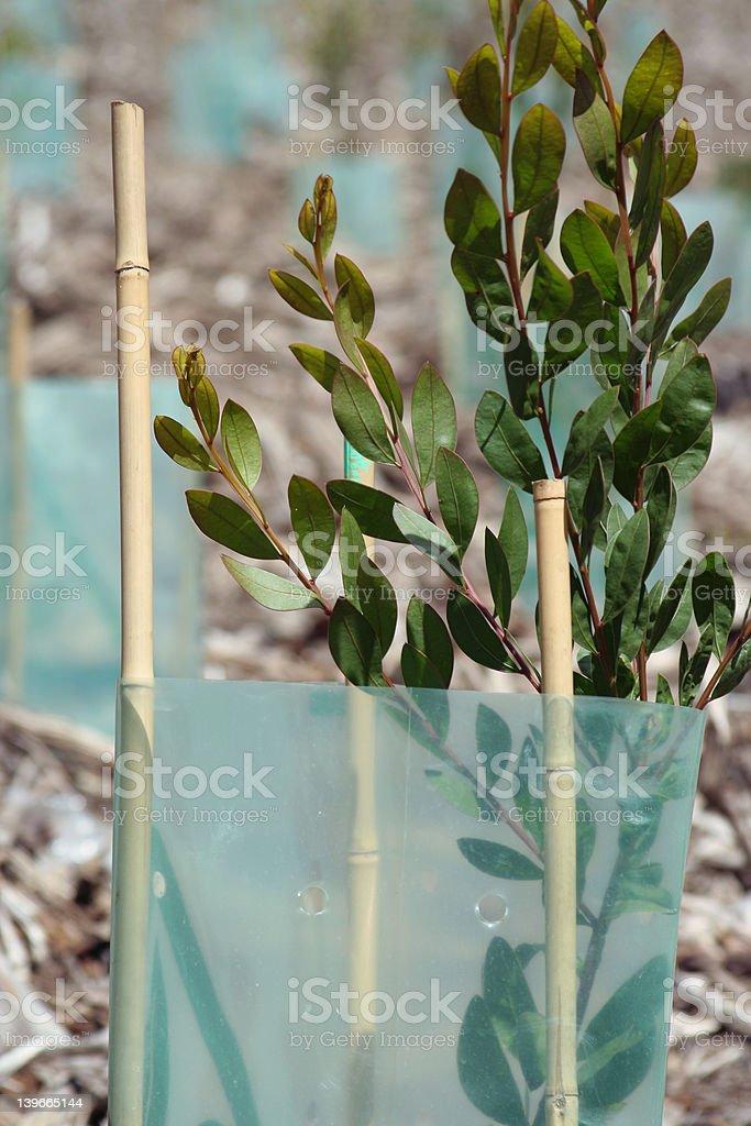 regrowth 1 royalty-free stock photo