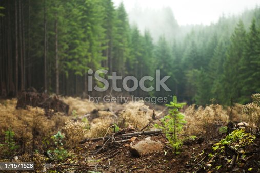 Plants and saplings growing in a previously logged area of a foggy forest in the Cascade Range of Oregon.