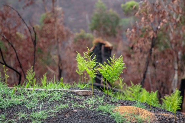 Regrowth in the Blue Mountains stock photo