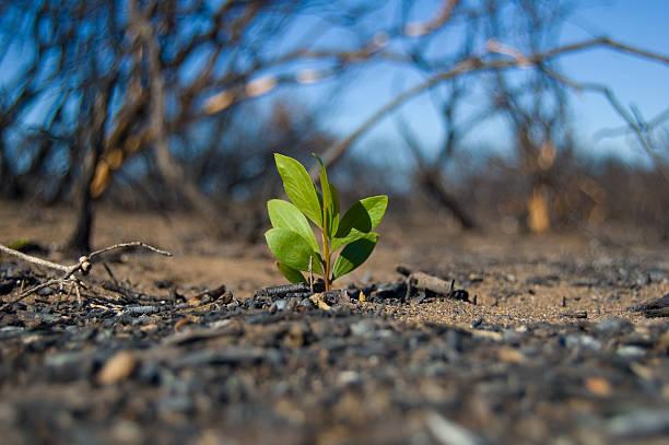 regrowth - wiederaufforstung stock-fotos und bilder