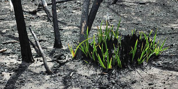 regrowth - herbebossing stockfoto's en -beelden