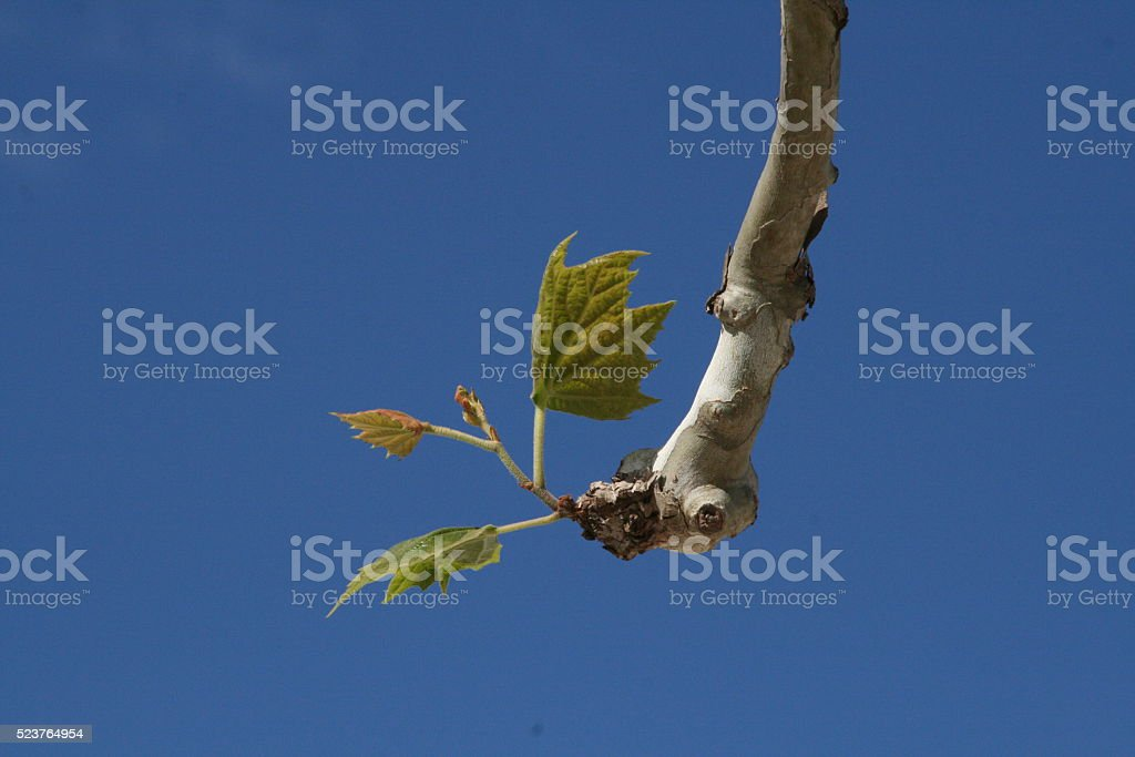 Regrowth stock photo