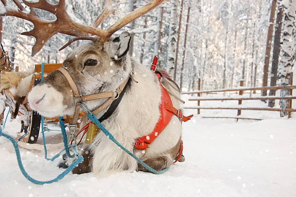 Reindeer and Sleigh on a Snowy Winter Day stock photo