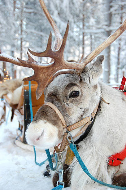 Reindeer and Sleigh stock photo