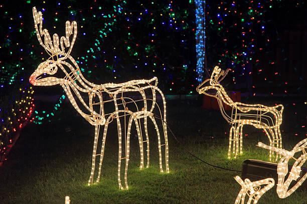 rentier weihnachten dekoration lichter - lichtschlauch stock-fotos und bilder