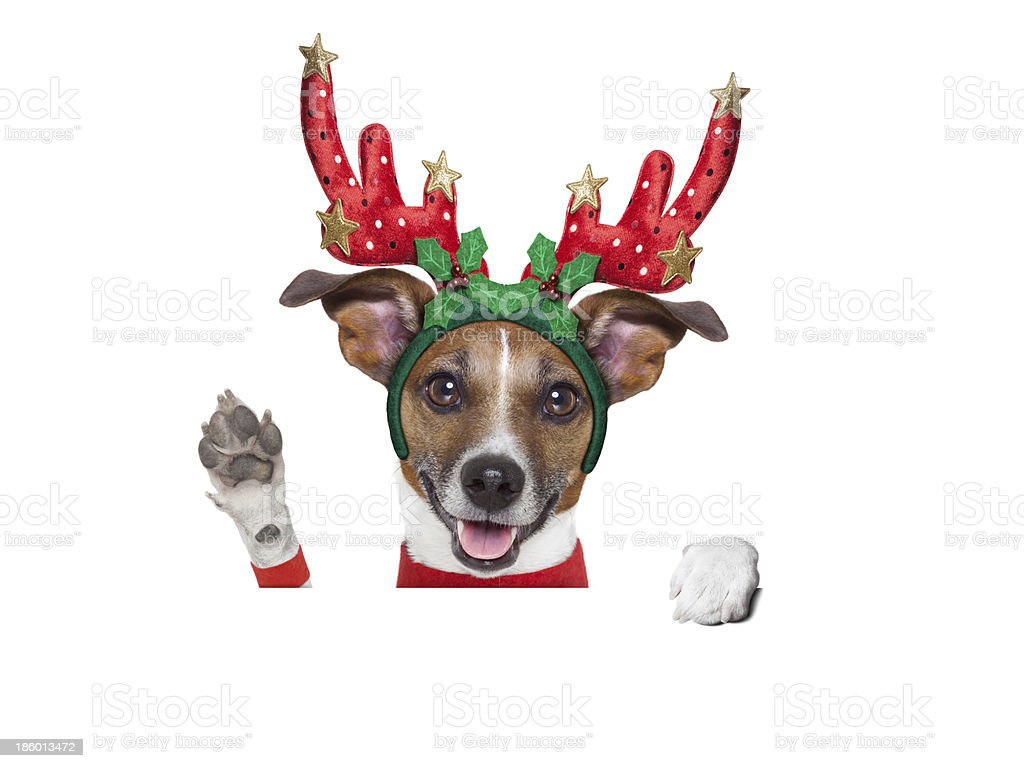 reindeer dog royalty-free stock photo