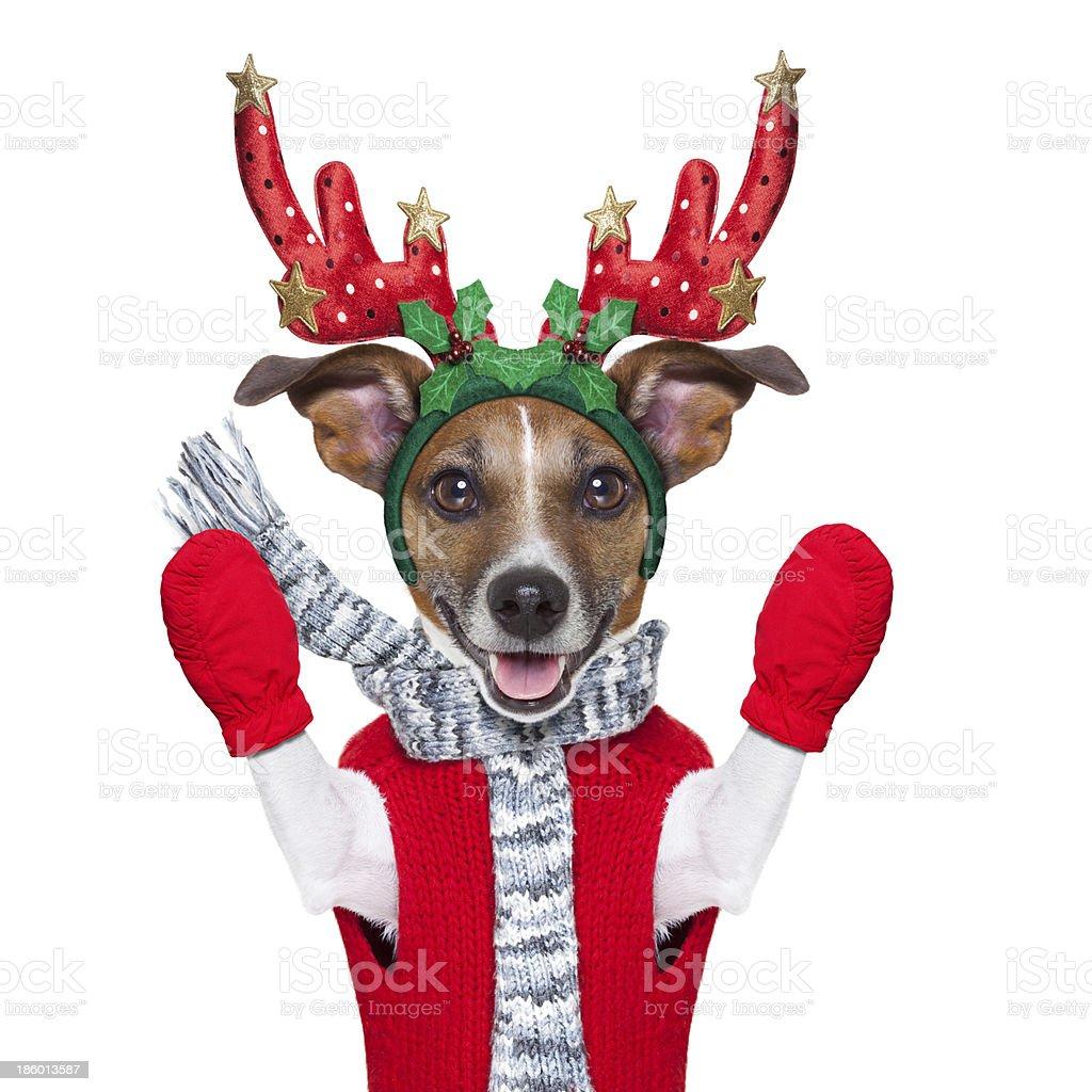reindeer dog royalty-free stock photo