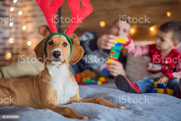 Reindeer dogdeer picture id623063880?b=1&k=6&m=623063880&s=612x612&h=0ycgx omwck unci9bl0de1d54 nzsqg8ac1tdugqde=
