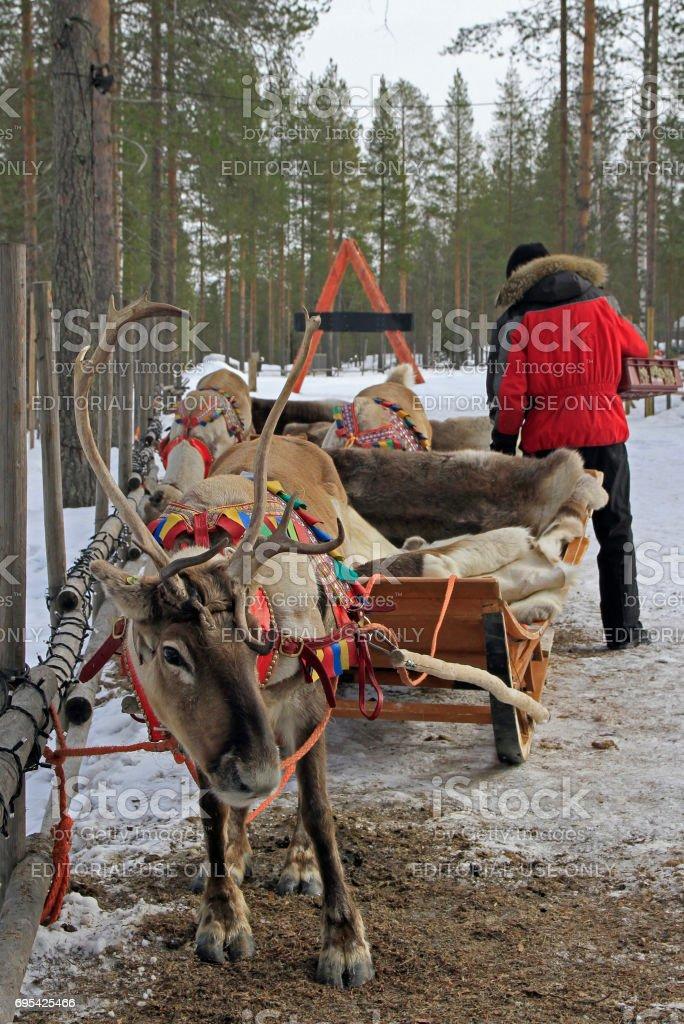 reindeer in Santa Claud village, Lapland stock photo